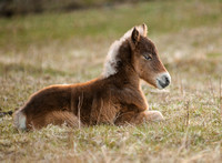 Foal in Grayson Highlands State Park, VA