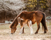 Mother and Foal, Grayson Highlands State Park